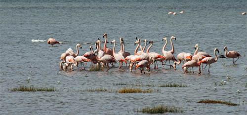 flamingos in lagoon