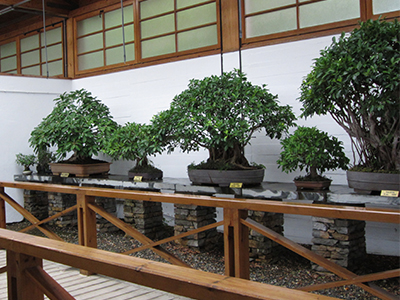 The Bonsai museum is situated in Parque de la Represa in Marbella - Photo by Annabel Kaye